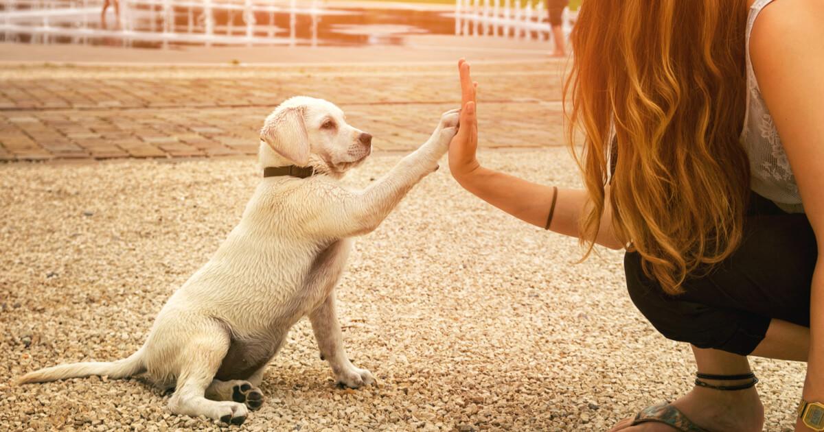 犬 飼い方 約束