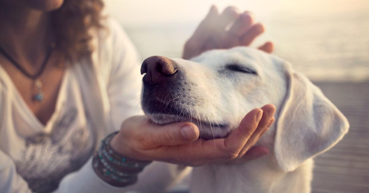 犬 ペット 好き